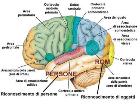 cervello razzista anti-rom